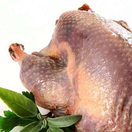 فرصت استثنائی فروش گوشت بوقلمون طبیعی |