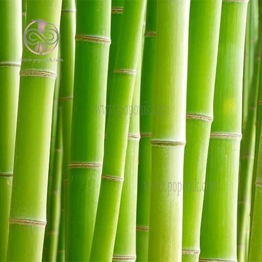 تصویر بذر بامبو سبز