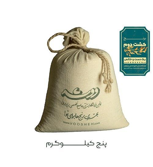 تصویر برنج ایرانی کشت دوم