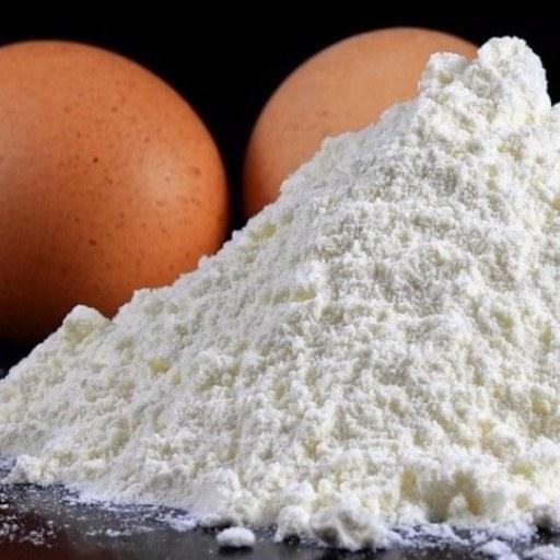 پودر سفیده تخم مرغ  