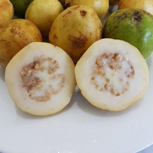 میوه گُواوا (زیتون محلی)
