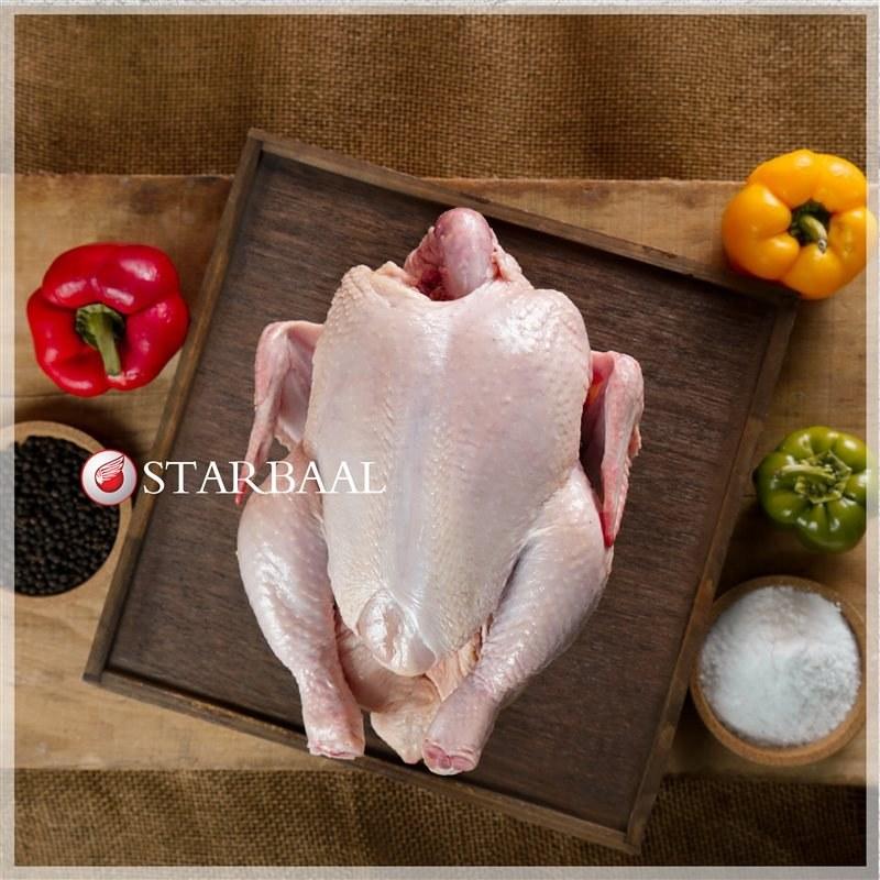 تصویر مرغ وزن تقریبی هر مرغ ۲ کیلوگرم است