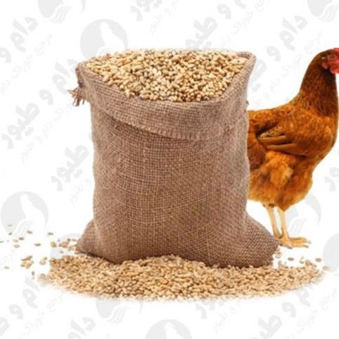 تصویر فروش کنسانتره مرغ گوشتی ایرانی و خارجی
