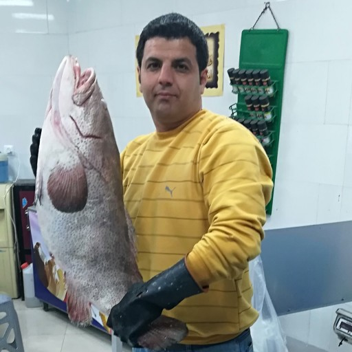 ماهی هامور | ماهی هامور یکی ازمعروفترین ماهیهای خلیج فارس است
