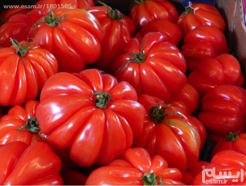 بذر  گوجه فرنگی ژولیده |