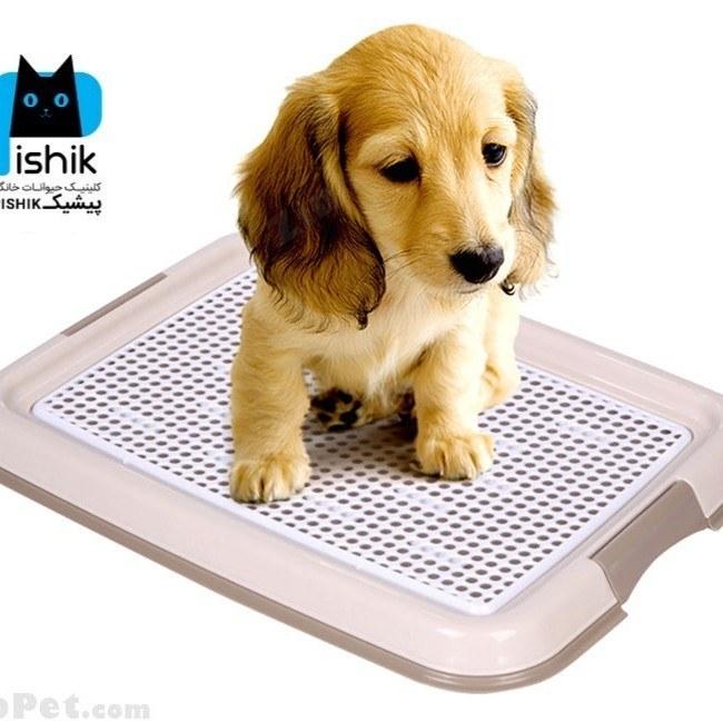 توالت سگ و سینی آموزش دستشویی سگ |