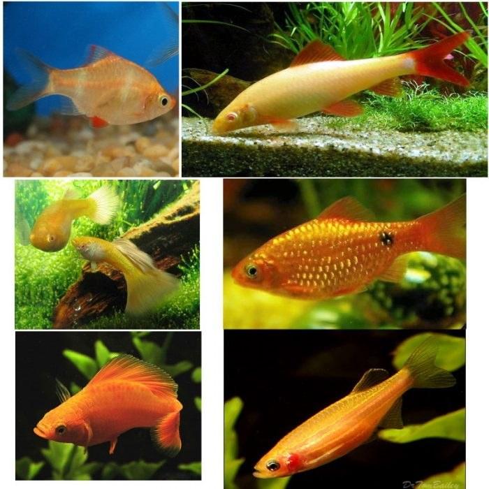تصویر پک ماهی های گیاه خوار(طیف رنگی خورشیدی)