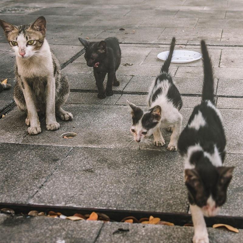 تصویر غذای خشک گربه حمایتی وزن 1 کیلوگرم