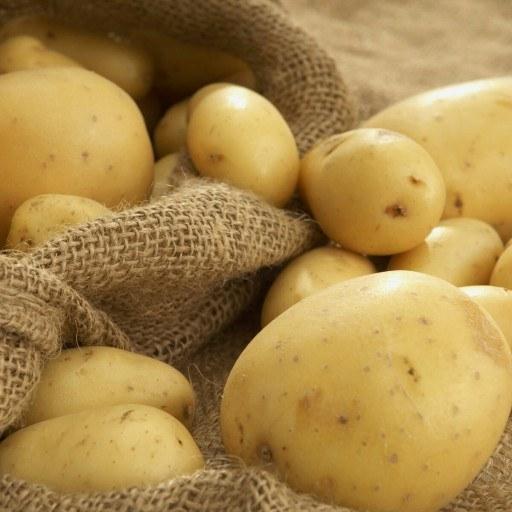 سیب زمینی بروجن مخصوص صادرات | سیب زمینی صادراتی ( تناژ )، قیمت توافقی
