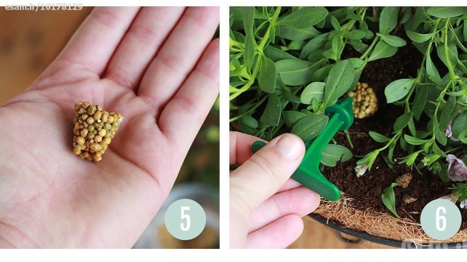 4 گرم کود کامل برای گیاهان آپارتمانی Pokon هلند - حل شدن آهسته در خاک و ماندگاری بالا | 4 گرم کود کامل برای گیاهان آپارتمانی Pokon هلند